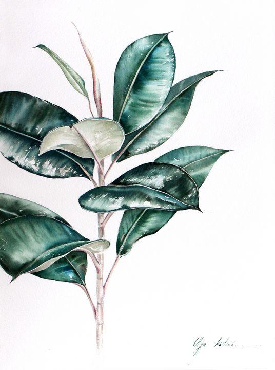 Ficus Elastica - Olga Koelsch
