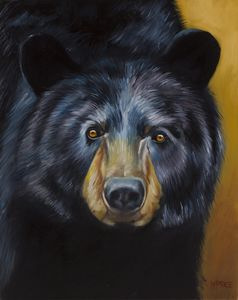 In the Eyes of a Bear