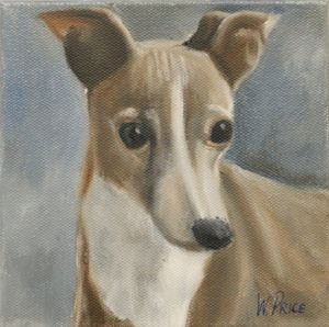 Finny, The Blue Italian Greyhound
