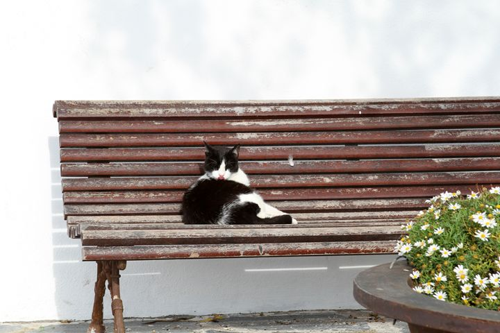 Cat on Bench in Cadaqués - Jose Silva