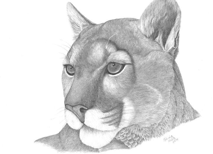 Mountain Lion - PatriciaHiltz
