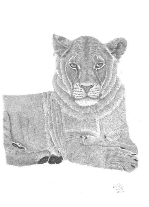 Nyah The Lioness - PatriciaHiltz