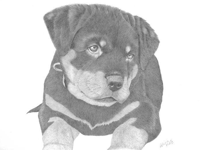 Rottweiler Puppy - PatriciaHiltz