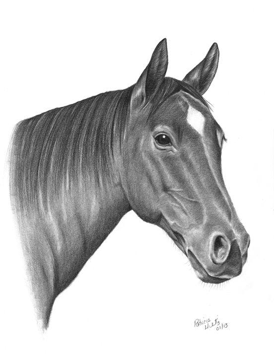 A Horse Beauty - PatriciaHiltz