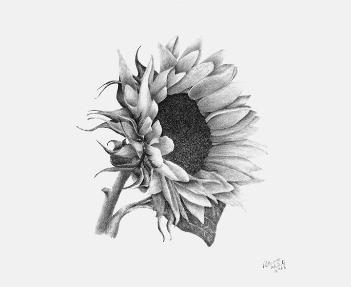 A Sunflowers Beauty - PatriciaHiltz