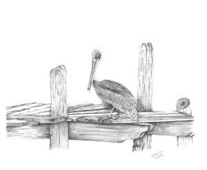 Brown Pelican - PatriciaHiltz