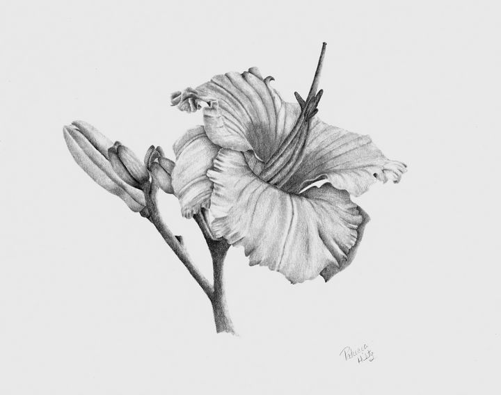 My Garden Lilies - PatriciaHiltz