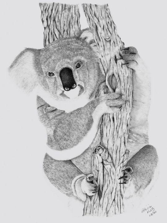 Koala - PatriciaHiltz