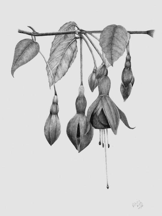 Fuchsia - PatriciaHiltz