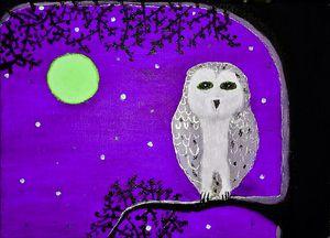 Midnight owl Fuchsia