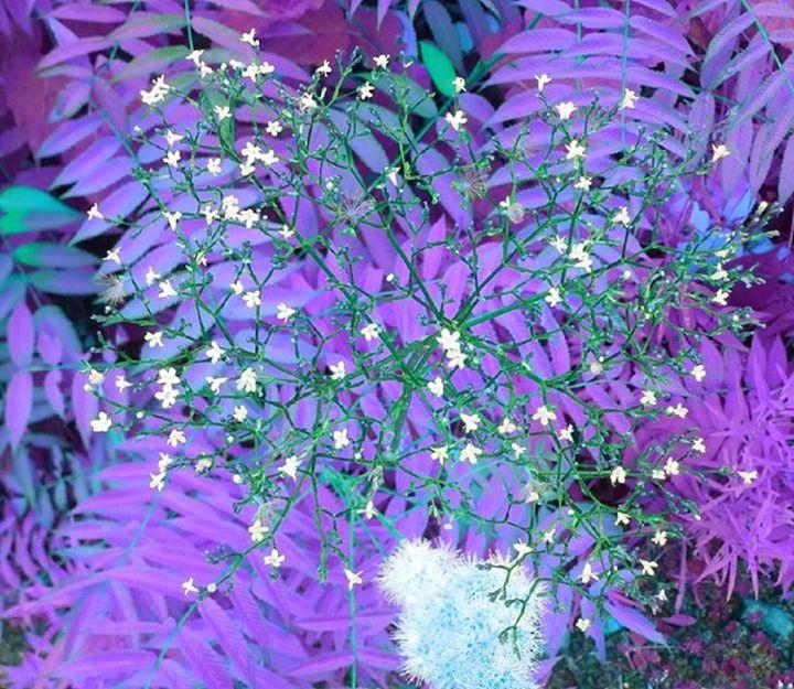 Purple nature - Demonnova