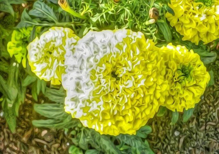 Flower draw - Demonnova