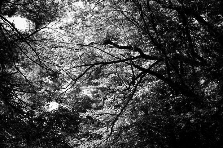 Nature's Symphony - Del Zuniga