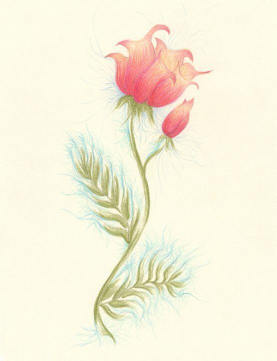 Rosy Tulip - M Joseph