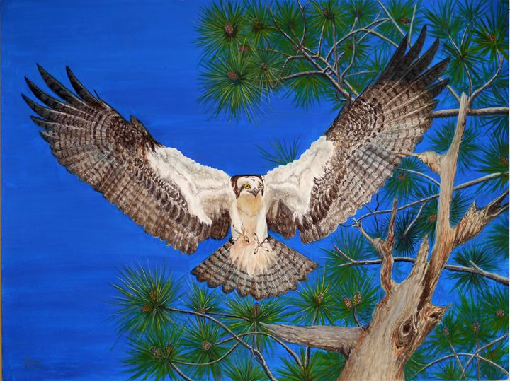 Osprey - D. Williams