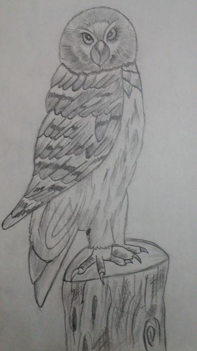 Owl - Shivam kumar