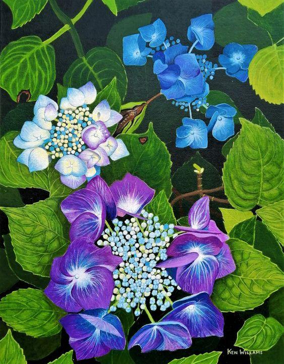 Hydrangea - K. H. N. Williams