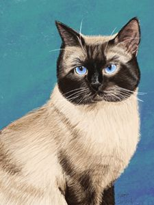 Siamese Cat Portrait