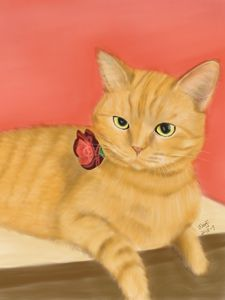 Orange Cat Portrait