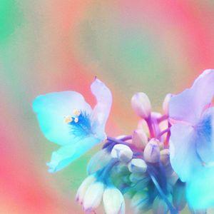 Flower Psychedelics