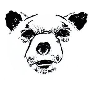 Head of Bear