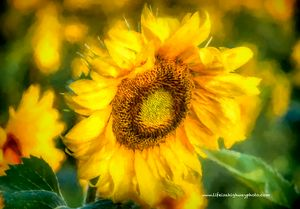Sunflower Paint Effect