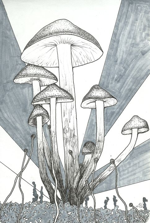 Mushrooms - Julian Allen Johnson