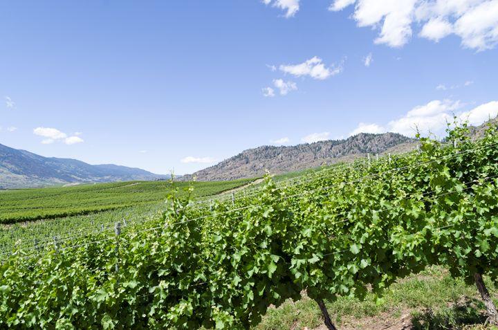 Okanagan Valley wine country - Bob Corson Photography