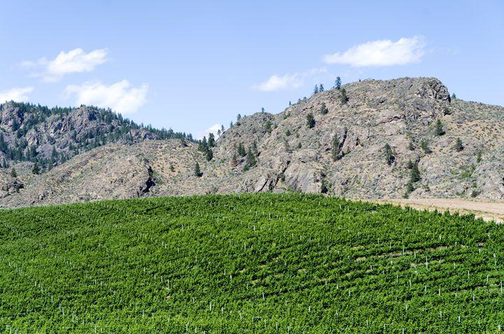 Okanagan Valley wine country 17 - Bob Corson Photography