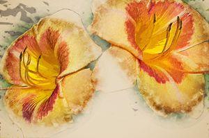 Multicoloured day lily 3 mp digital - Bob Corson Photography