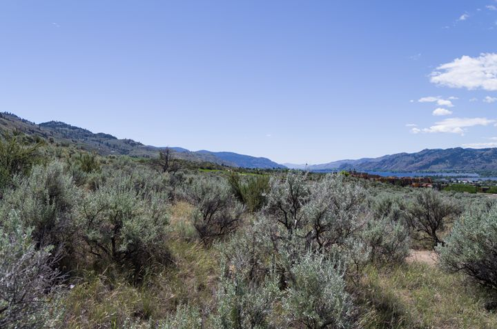 Sonoran Desert Landscape 42 - Bob Corson Photography