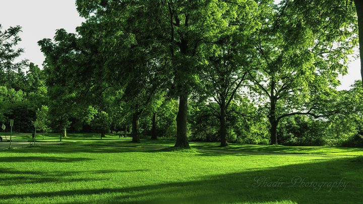 Green scenery - Ghadir Photography