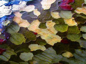 Macro bark