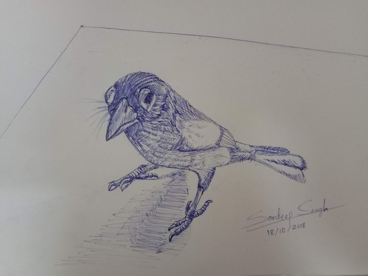 Green Barbet - Ballpoint Pen ink - Sandeep's gallery