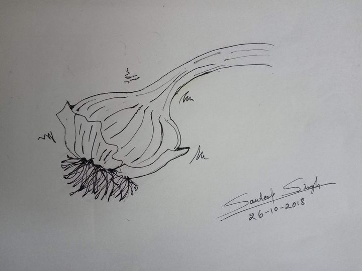 Garlic - intuitive drawing, pilot - Sandeep's gallery