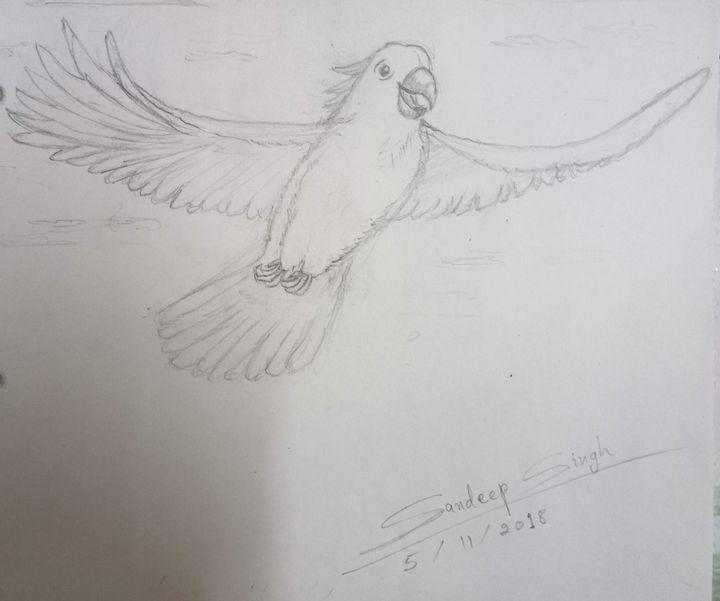 Cockatwo1 - Cockatoo in Joyful - Sandeep's gallery