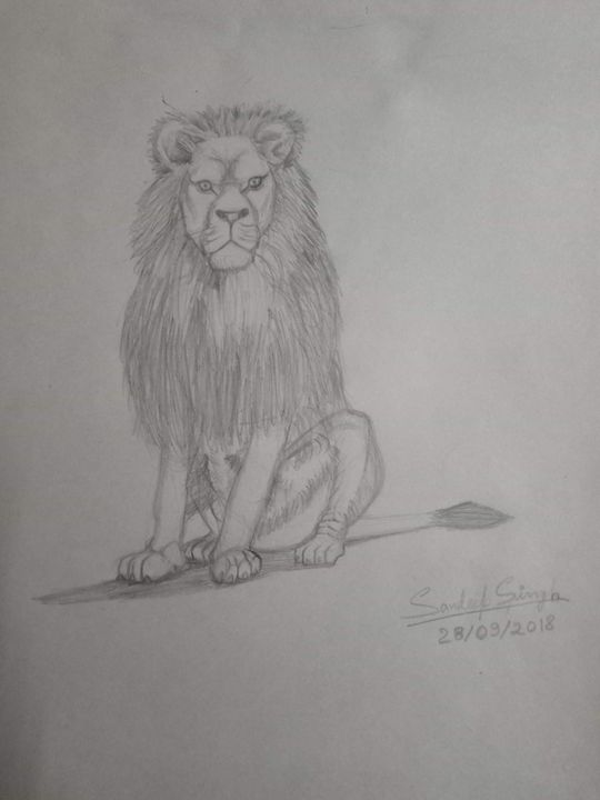 Majestic Lion - Sandeep's gallery
