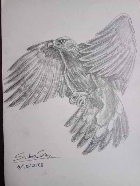 Golden Mountain Eagle - Sandeep's gallery