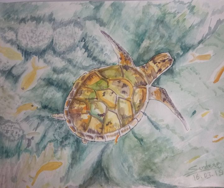 Turtle A lone traveller - Sandeep's gallery