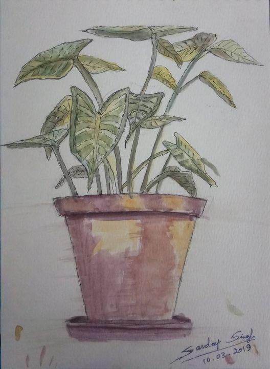 Backyard Plant Pot - Sandeep's gallery