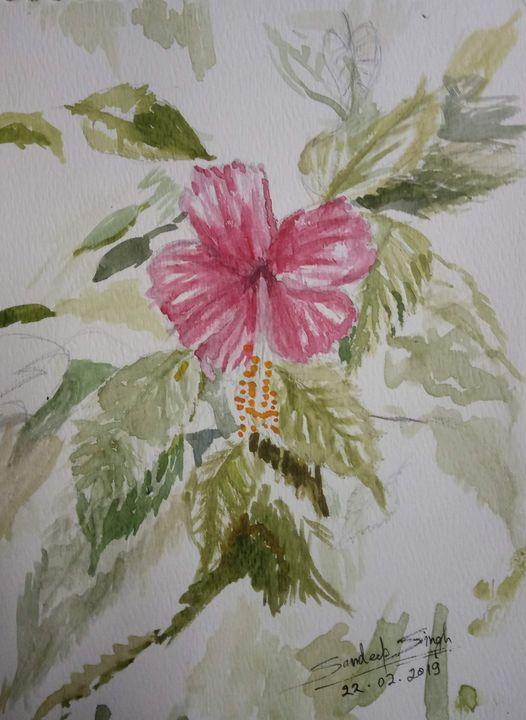 China Rose - Sunshine - Sandeep's gallery