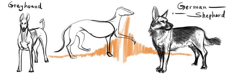 Greyhound, Shephard V1 - Digital(PS) - Sandeep's gallery