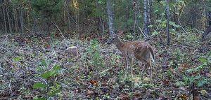 Bambi #2