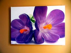 Purple Crocuses - Chameleon Canvas Art