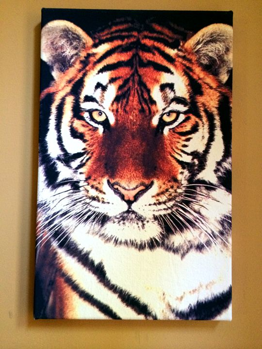 A Tiger - Chameleon Canvas Art