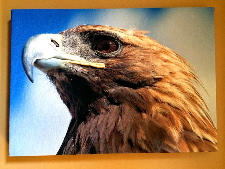 A Golden Eagle - Chameleon Canvas Art