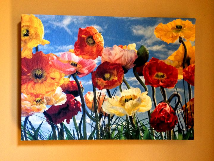 Colorful Poppies - Chameleon Canvas Art