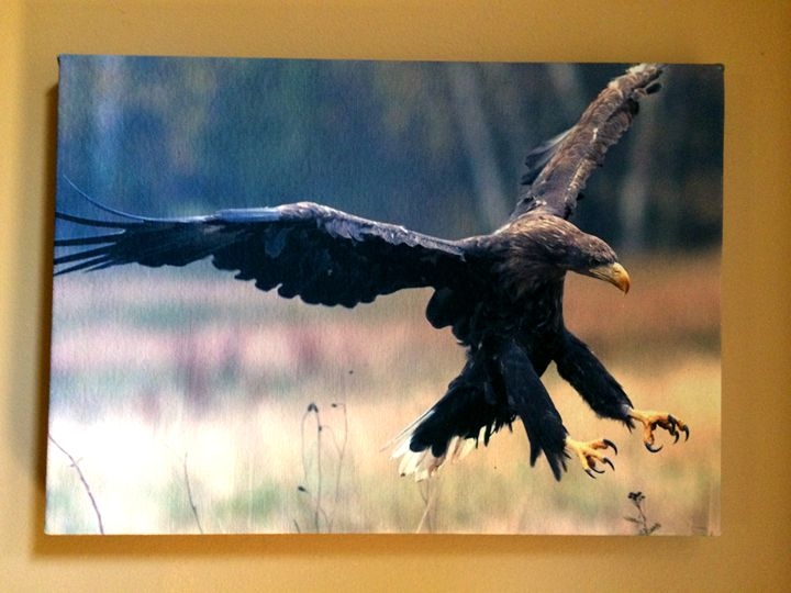 Eagle - Chameleon Canvas Art