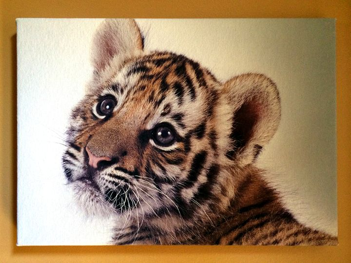 Tiger cub - Chameleon Canvas Art