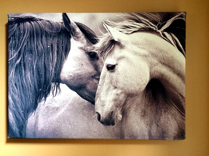 Horses - Chameleon Canvas Art
